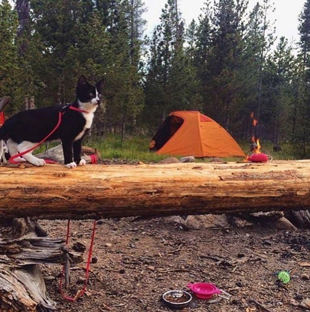 Cats That Enjoy Outdoor Adventures (Photos)