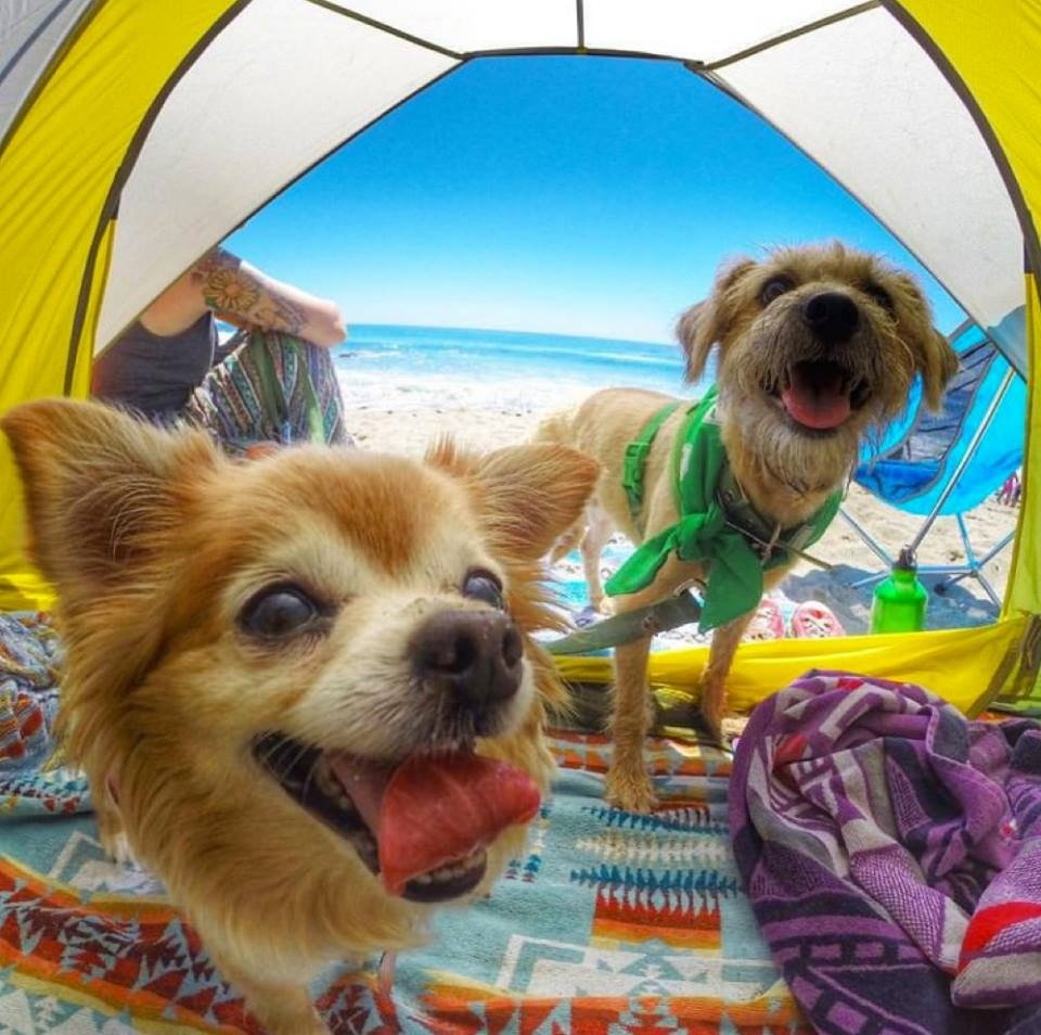 Camping with Your Dog (Photos)